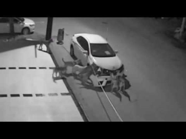 Embedded thumbnail for Ilyen, amikor kutyák törnek autót